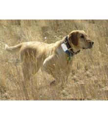 GPS lokator za lovačke pse dimenzije 70x35x20 mm