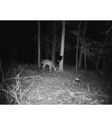 4G lovačka kamera za noćno snimanje